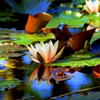 Краски на воде :: Alexander