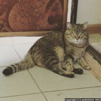 Кошка Матрёна на даче :: Юрий А. Денисов