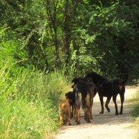 благородное семейство на прогулке :: tgtyjdrf
