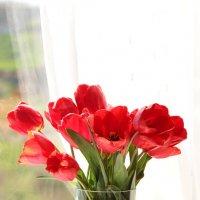 Тюльпановое настроение :: Nyusha