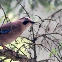 bird3 :: yameug _