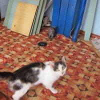 Кошка-мама :: Людмила Монахова