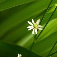 Микроцветы :: Юрий Кольцов