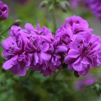 Цветочный хоровод-137. :: Руслан Грицунь