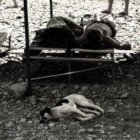 Утомлённые солнцем :: Катерина Чебышева