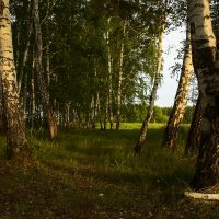 Лесная опушка :: Kassen Kussulbaev