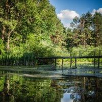 Заброшенный мостик в лесу :: Наталья Лысенко