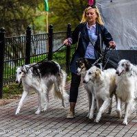 на выставке собак :: Виктор Николаев