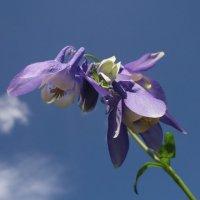 Лесной цветок :: Annа Vyatkina