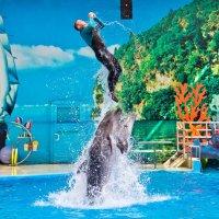 Анапский дельфинарий :: Алина Фаизова