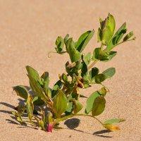 расту на пляже :: linnud