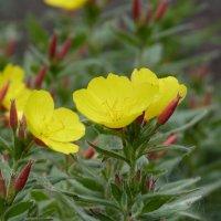 цветы :: Инга Егорцева