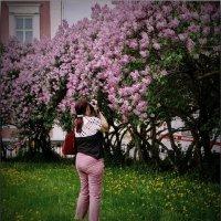 В сиреневом раю! :: Владимир Шошин