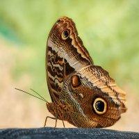 Бабочки в душе... :: олег