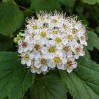 Лесной цветок :: Николай Ефремов