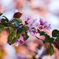 Весна :: Алёна Мартынцова