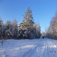 Зима :: Ирина Кот