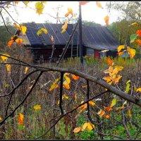 Осень в деревне... :: Ира Егорова :)))