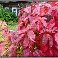 Красная осень... :: Ира Егорова :)))