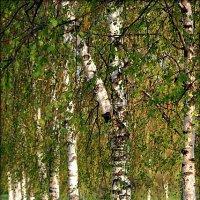 Весна... :: Евгеша Сафронова