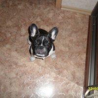 моя собачка :: Валерия Шевченко