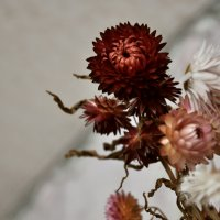 Цветы) :: Виктория Задорская