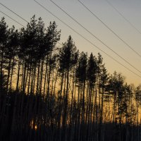 Закат в лесу :: Vladimir Lednev
