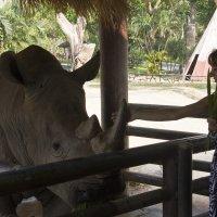 Приручение носорога :: Владимир Тихонов