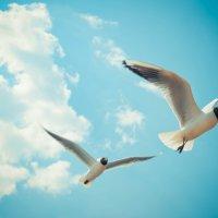 Чайки :: галина ваулина