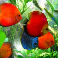 аквариумные жители :: галина ваулина