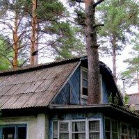 Заброшенный дом :: Татьяна Лютаева