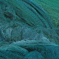 Минимализм зеленый :: Lidiya Dmitrieva