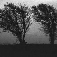 ... (35 mm) :: Александр Коновалов