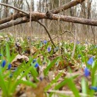 весна :: Константин Сегеда