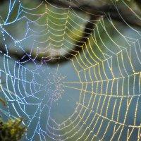 Радугу поймал паук! :: Сергей Алисейчик