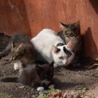 Семейное фото :: Александр Кузин