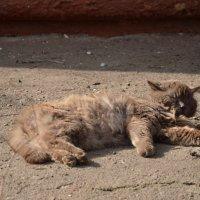 я на солнешке лежу  и на солнешко гляжу))) :: Александр Кузин