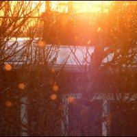 Зимний восход :: Наташа NorthCity