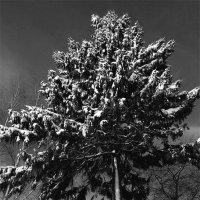 Последнее дыхание зимы. :: Alexander Antonov