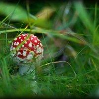 ...Среди травы... :: Андрей Гр