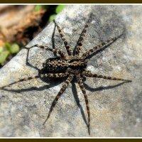 ...паук... :: Ира Егорова :)))