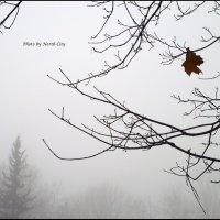 Одиночество :: Наташа NorthCity