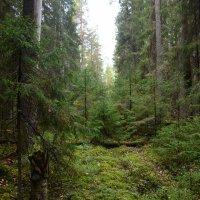 лес :: Борис Устюжанин