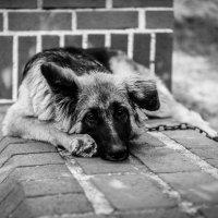 Собак :: Вадим Жирков