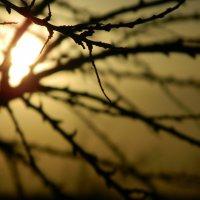 Закат :: мария комарова
