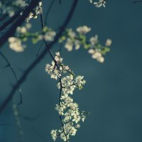 Весна настала! :: Яна Горбунова