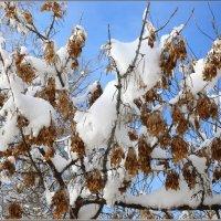 Мартовский снег :: galina tihonova
