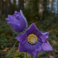 цветочки :: Борис Устюжанин