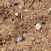 Песок :: Иван Веризуб