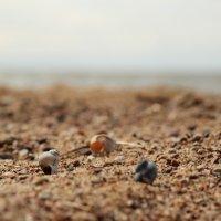 Пляж 3 :: Иван Веризуб